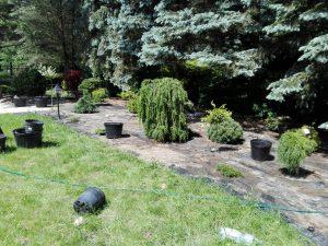 Przycinanie żywopłotu, Usługi ogrodnicze