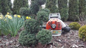 Sprzątanie ogrodów , Bełchatów